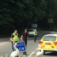 Some swans helped this police force attempt their best Hot Fuzz impression