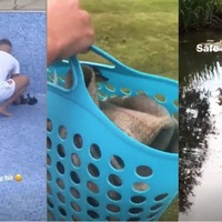 Aaron Ramsey saves ducklings from empty swimming pool