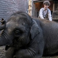 Belfast blitz movie Zoo: How a young elephant was hidden in a back yard