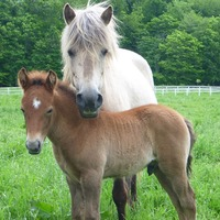 Horses read our emotions from tone of voice and facial expression