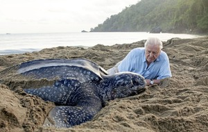 Attenborough 'astonished' by the response to plastic pollution after Blue Planet II