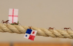 Flag-carrying ants predict England World Cup win over Panama