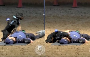 Spanish police dog 'performs CPR' on his partner