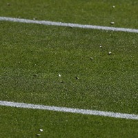 Flying ants cause problems for players as they descend on Wimbledon