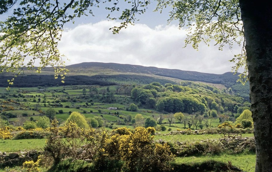Storm Ali: Man killed by falling tree in Slieve Gullion Forest Park