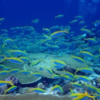 Coral reefs damaged by ecological effects of rat invasion