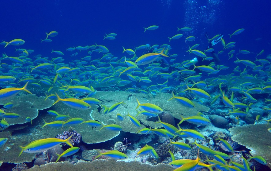 Tropical islands without rats have healthier coral reefs