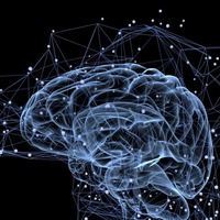 Every individual has a unique brain anatomy, study reveals