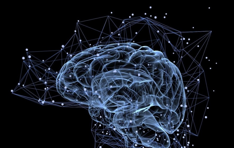Every individual has a unique brain anatomy, study reveals - The ...
