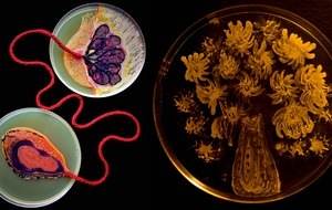 You need to see this award-winning artwork made entirely from microbes