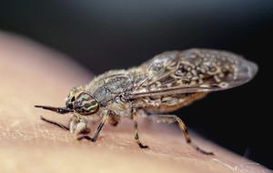 Horsefly bites: How to tell when you've been bitten and what you should do to treat one