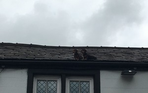 How on earth did these dachshund puppies end up on this roof?