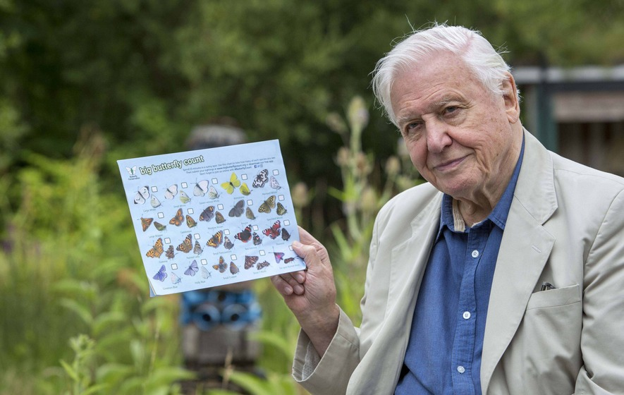 The presenter and naturalist was on the show to urge people to take part in the world's biggest butterfly count