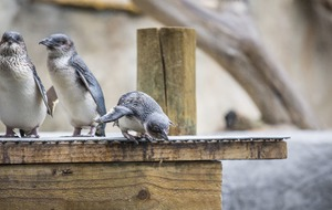 New Zealand aquarium writes a hilarious monthly 'naughty list' for its penguins