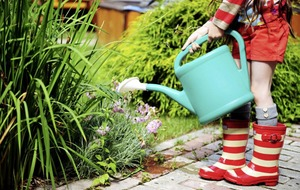 Gardening: Ten ways you can save water during the summer heatwave