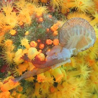 Sea corals team up to catch and eat stinging jellyfish
