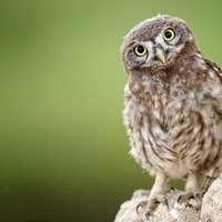 Nuala McCann: Springwatch owls reminded me I love nature, but not up close