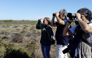 Travel news: Birdwatching in the Algarve, musical tour to Germany, summer sun