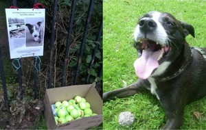 This tennis ball memorial to a beloved dog is bringing joy to other pooches