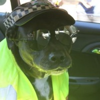 Terminally ill dog ticks 'riding in a police car' off bucket list