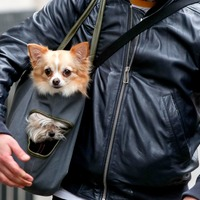 This US company is offering 'fur-ternity leave' for new pet parents