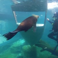 These seals playing with a sunken boat are having so much fun