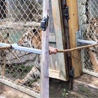Watch these tigers play tug-o-war with their keepers