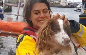 See a dog in a tiny life jacket as stricken speedboat is towed to safety