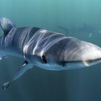 Belfast man catches shark... which bites his arm
