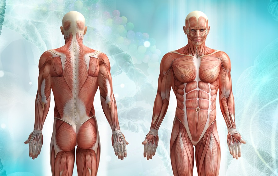 7 Myths About The Human Body That Are Often Mistaken As Facts The