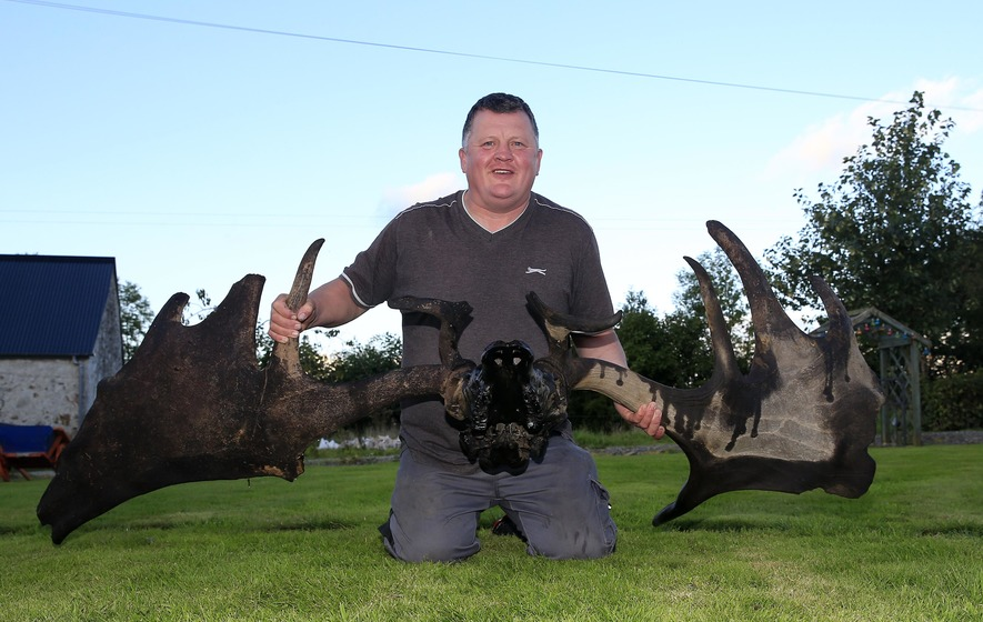 Irish Elk's head and antlers found in Lough Neagh by fishermen