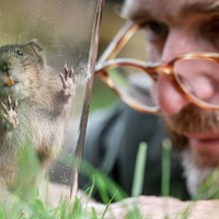 'Ratty' returns to river as charity reintroduces water voles to Exmoor