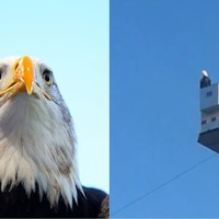 Bald eagle lands on fire engine during 9/11 memorial ceremony