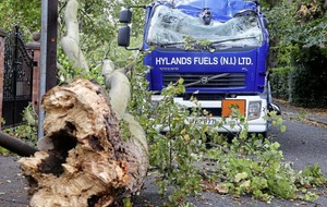 Storm Ali: Record winds fell trees and cause widespread road closures