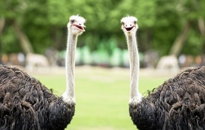 Don't be an ostrich and 'sleepwalk' into retirement