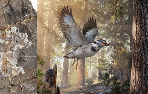 Ancient 'missing link' was part bird, part dinosaur