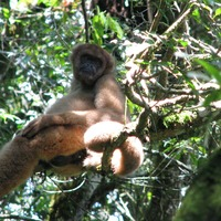 Human activity slashed mammal population of Brazil's Atlantic Forest by half