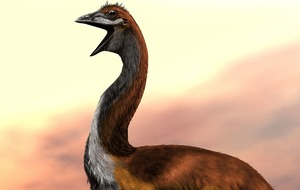 Largest bird that ever lived revealed