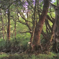 Intrigued wildlife caught on camera in pine forest