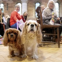 Pets blessed at special cathedral service