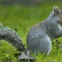 Driver saves life of squirrel after car scare