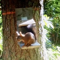 Belfast Zoo red squirrels provide welcome boost to Montalto Estate