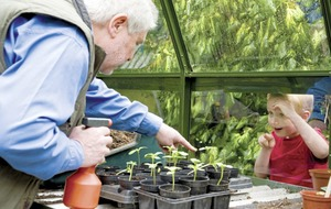 Gardening tips: Prep your greenhouse for winter