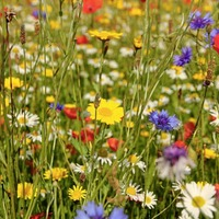 The Casual Gardener: Making your own meadow takes a bit of work so start now