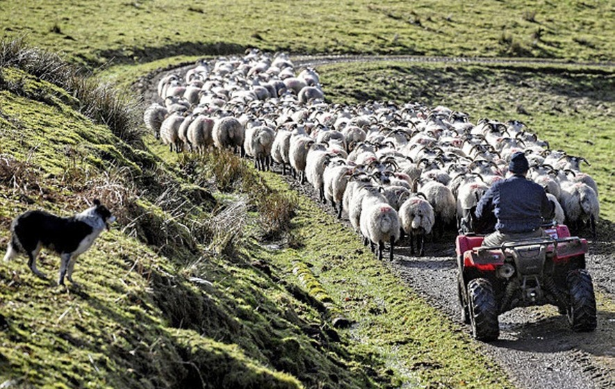 Post-Brexit agriculture plans will have serious impact on the north