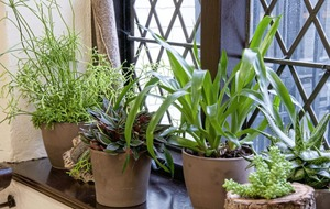 Gardening: Five ways in which indoor plants can help to boost wellbeing