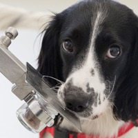 Sniffer dogs able to detect malaria in people