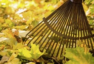 Casual Gardener: Harness nature's annual windfall