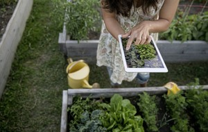 Gardening: Plant identification and advice at your fingertips – 4 of the best free apps