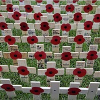 Crosses laid at Belfast City Hall in memory of those killed during First World War
